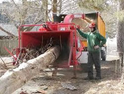 Tree Removalin Glendale